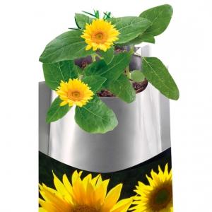 Plant Bag Sonnenblume